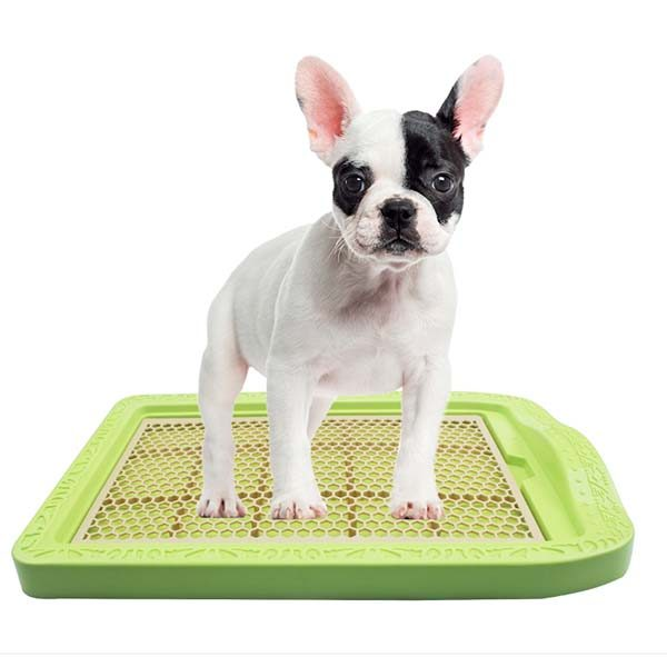 Training Pads For Dogs