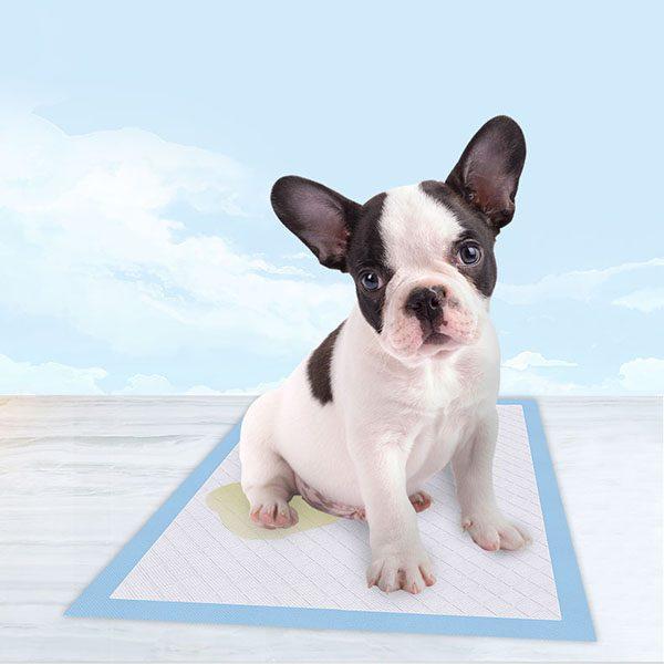 Wholesale Dog Training Pads