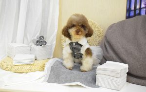 Best Training Pads For Puppy