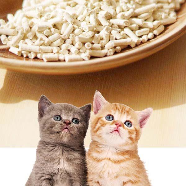 Cat Litter Supplier