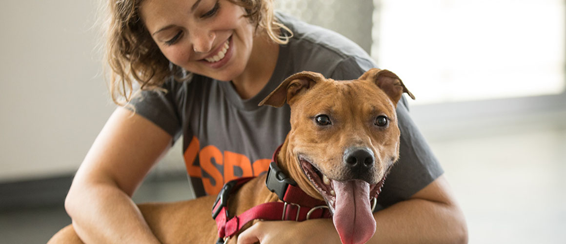 How to Adopt a Dog? What you should prepare for?