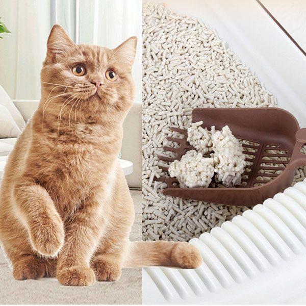 Litters For Kitten