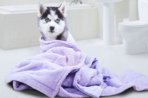Towel For Dog Bath