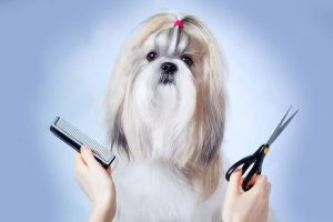 Tips For Grooming A Dog