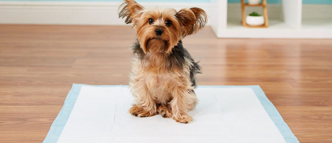 The Right Way for Puppy or Adult Dog Potty Training