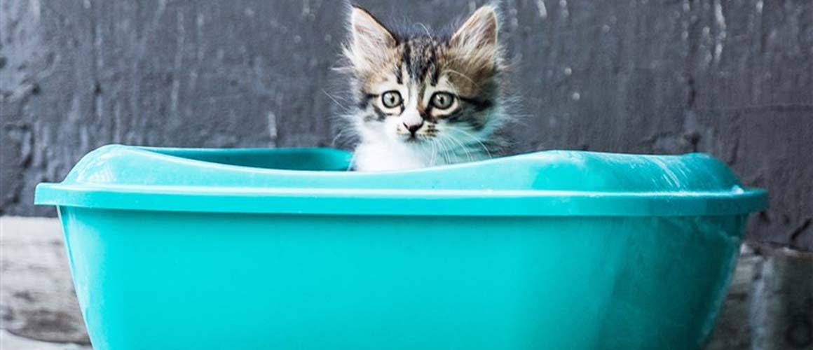 How to Choose the Best Litter Boxes for Your Cats?